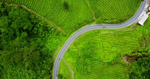 Video footage of top view of road on green tea plantation at Subang highland, West Java - Indonesia. Professional shot in 4K resolution