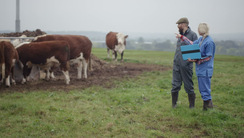 4K Farmer & vet with laptop checking on cattle out in the field