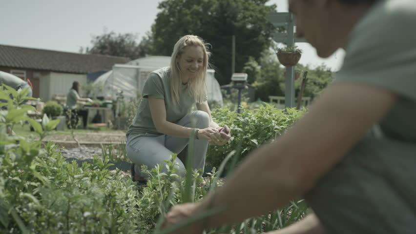 4K Cheerful group of volunteers working together in community garden