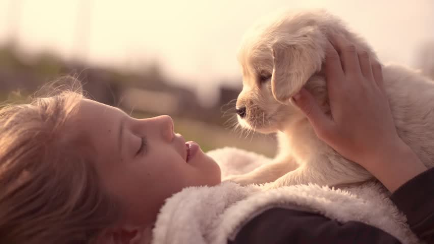 White Golden Retriever Puppy Cuddling Up with Owner Girl Laying on Lawn in Park Outdoors Summer Spring Day Kissing Hugging Petting | Shutterstock HD Video #25881104