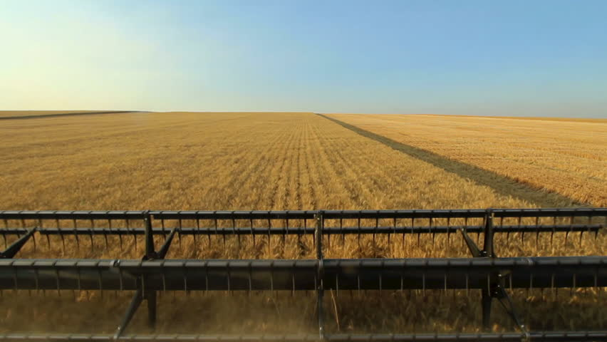 Combine harvesting wheat with a view of the field ahead