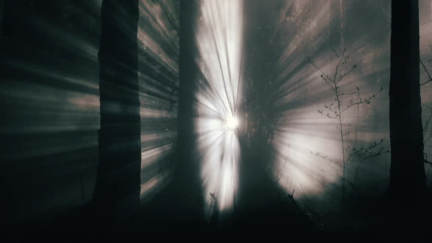 Cinematic light rays in the night forest smoke and fog | Shutterstock HD Video #25894502