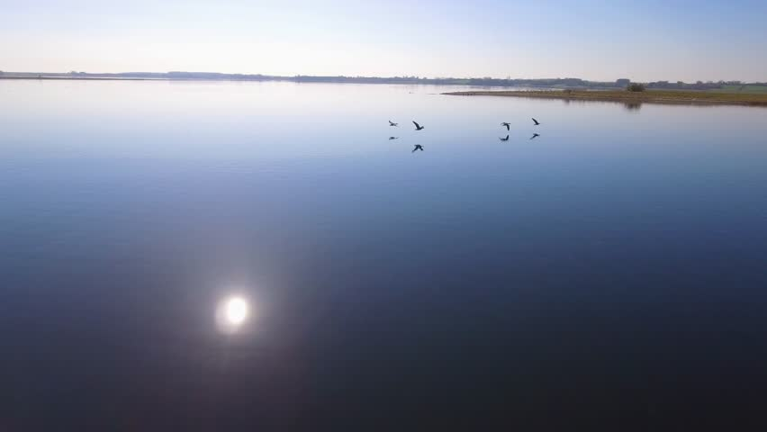 4K Aerial Geese Fly Low Over Water Part 7 Camera flying close behind a flock of geese flying low over the water, flying over a small island and land in the water.  the sun is shining