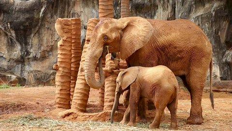 Elephants and elephants in the zoo