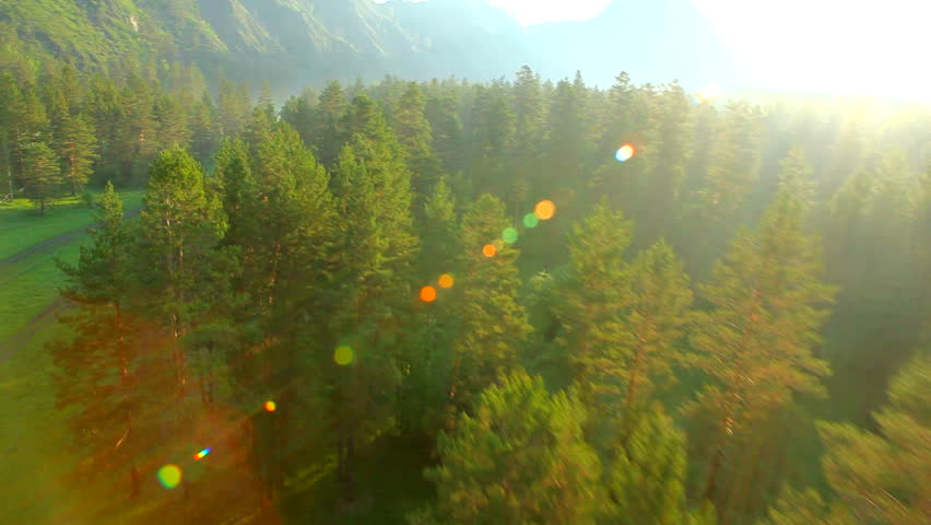 Aerial View. Flying Over The Beautiful Forest Trees. Aerial Camera ...