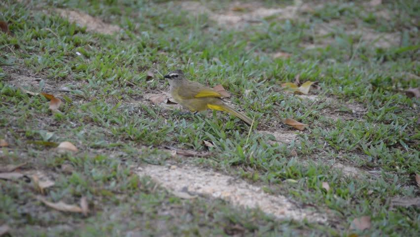 Header of warbler