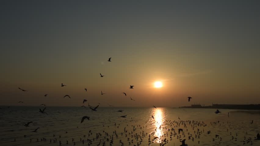 Beautiful sunset and flying birds over the sea surface | Shutterstock HD Video #26148506