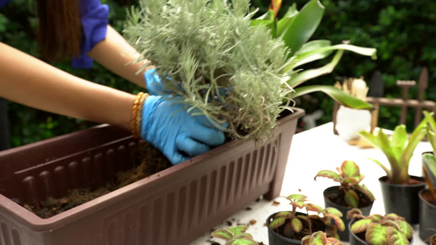 Woman gardening close up shot | Shutterstock HD Video #26253746