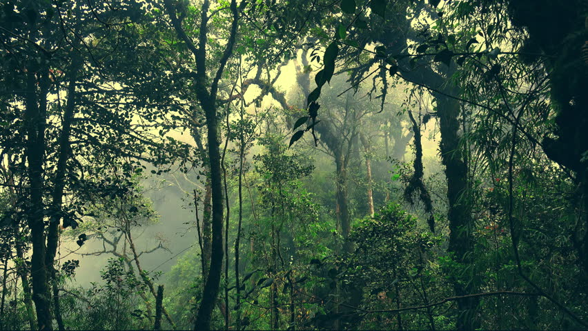 Mysterious landscape with grim exotic jungle covered with fog. Enchanted foggy forest full of lush vegetation. Beautiful nature of gloomy Malaysian rainforest shrouded in mist. Camera stays still.