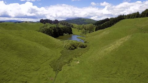 Aerial view of green beautiful meadows with rolling hills in Rotorua, New Zealand North Island.