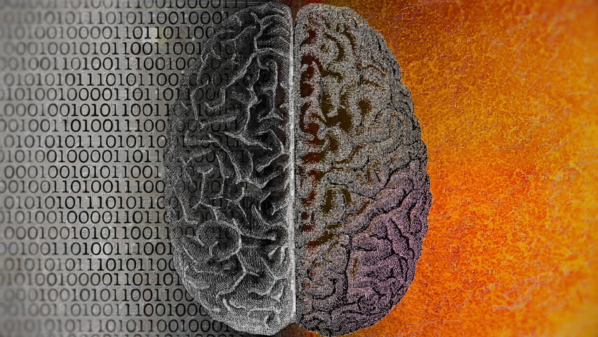 Left vs Right Brain. Difference between the two cerebral hemispheres