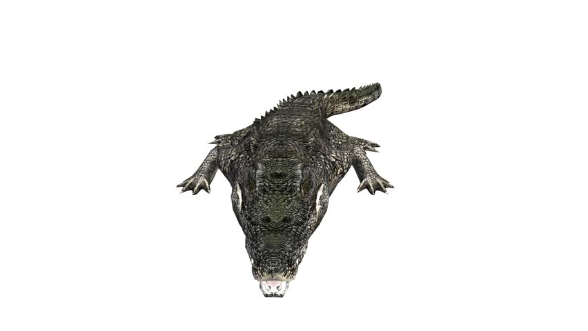 Image of: Sweden Crocodile Open Mouth Attack Hunting Eatingdangerous Animals Cg02237 Shutterstock 500 Crocodile Alligator Reptile Caiman Zoo Danger Africa Teeth