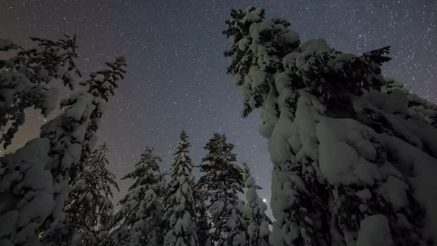 Type The Night Starry Sky in Winter. in The Sky Flying Stars. Trees Covered With White Snow. Tree Still Standing Under a Clear Starry Sky.