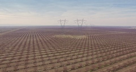 Aerial of Farming Almond pistachio trees and power lines