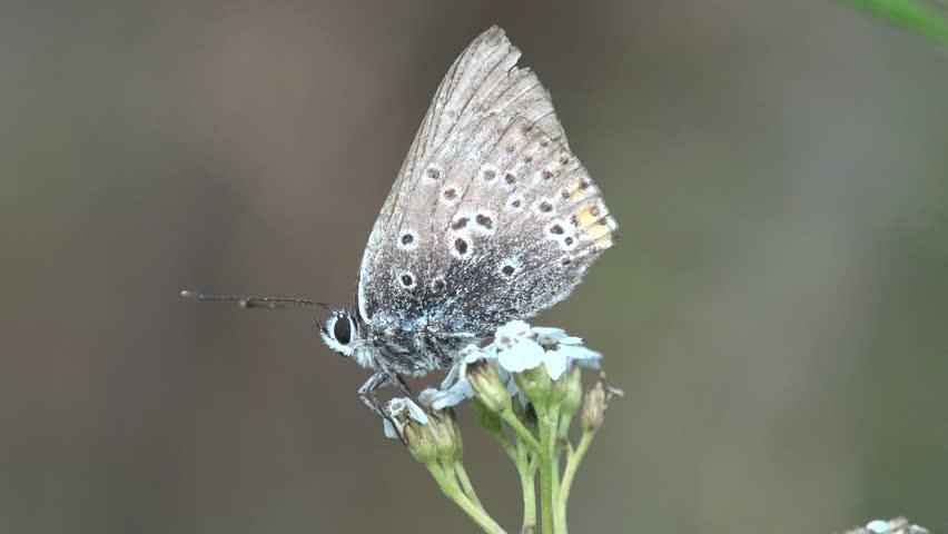 Header of Lepidoptera