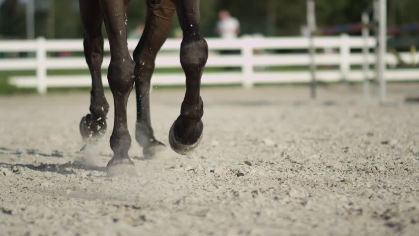 SLOW MOTION, CLOSE UP, DOF: Detail of horse legs working trot in big sandy outdoor riding arena. Female rider riding traver in dressage. Stallion performing haunches-in competing on the competition