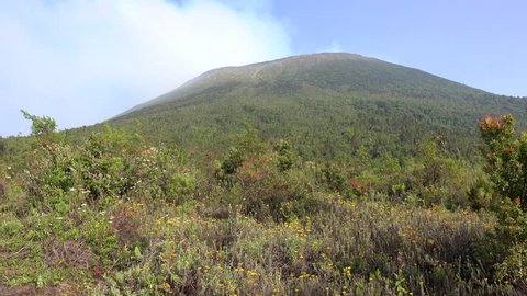 Nyiragongo Volcano, active Stratovolcano, Landscape, Daytime, Hiking up to the Volcano. Landscape with a wonderful view, Flowers, lava and plants. 2017 Democratic Republic Congo, Africa.