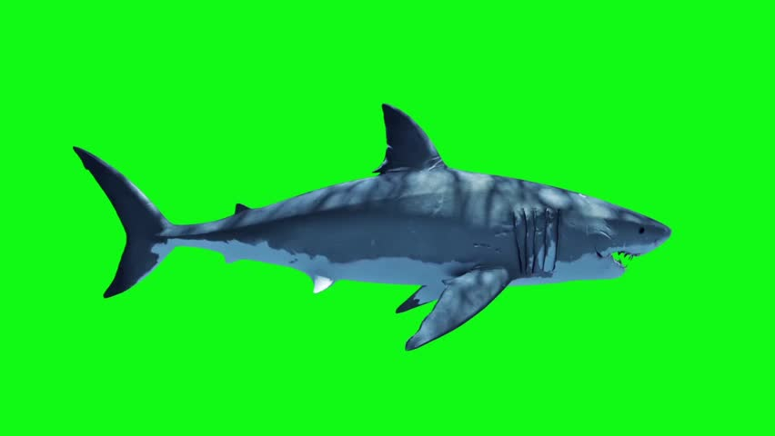 White Shark Attack Loop Side Green Screen 3D Rendering Animation