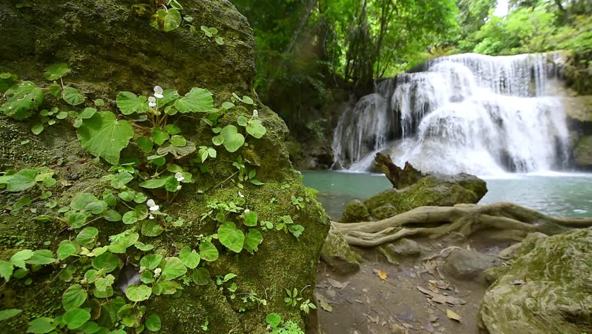 Flower and waterfall in Kanjanaburi Province, Thailand | Shutterstock HD Video #27048556
