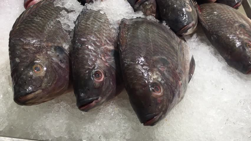Raw Nile Tilapia Fish on Ice in Market