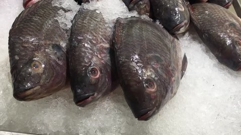 Raw Nile Tilapia Fish on Ice in Market