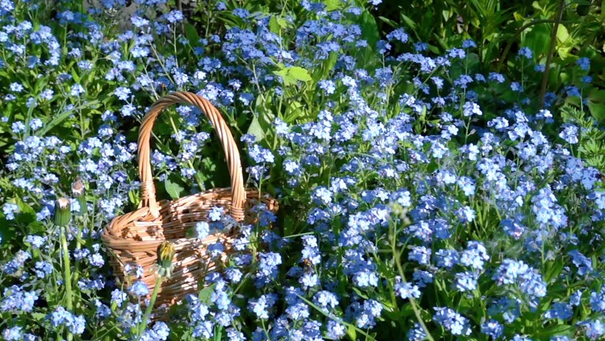 Small Wicker Basket Among the Blue Flowers on the Lawn Lighted by the Sun. | Shutterstock HD Video #27206146