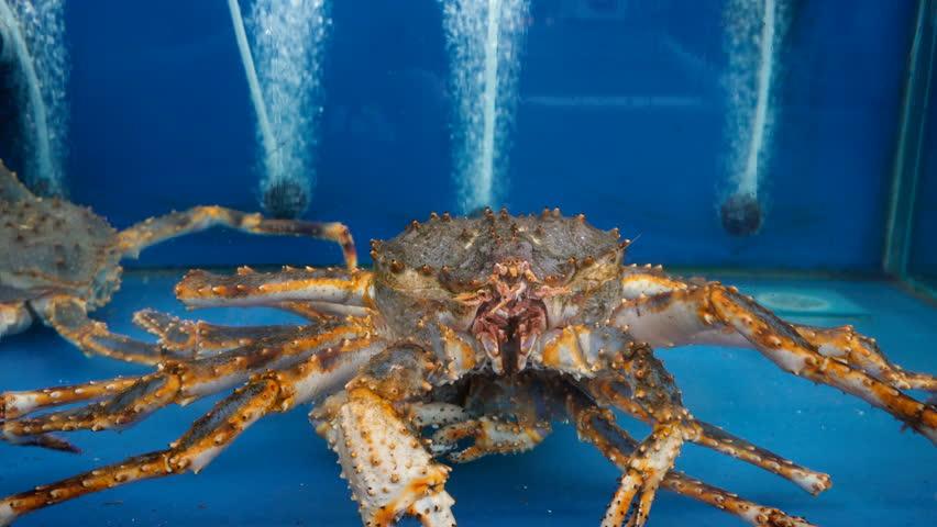 Header of Alaskan King Crab