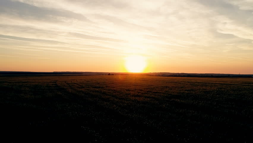 Flight over the green wheat field at sunset, towards the sun | Shutterstock HD Video #27499846