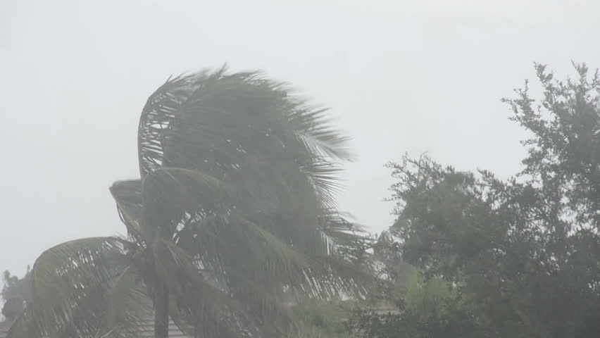 Hurricane battering palm tree