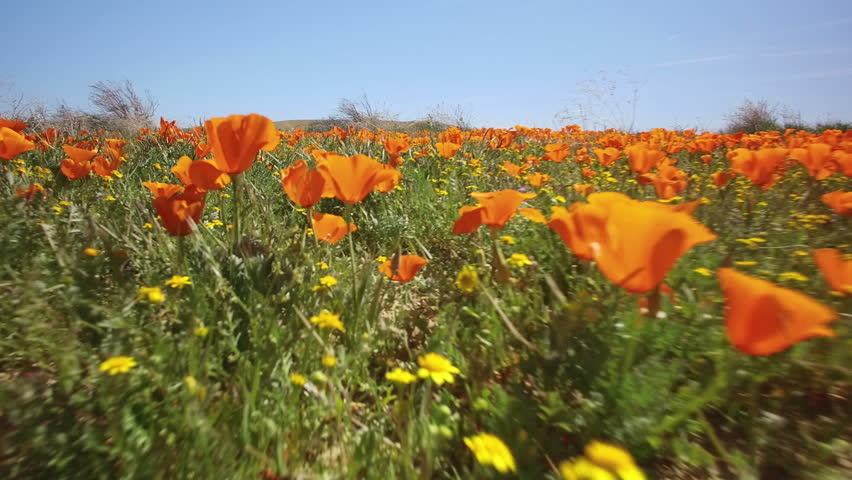 Flower Field Bugs Eye View 13 Poppy 3 Axis Gimbal Stabilizer #27638860