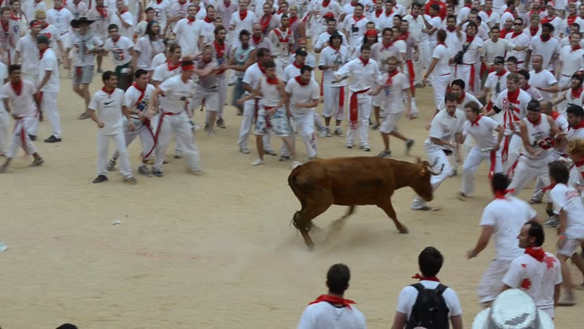 PAMPLONA - SPAIN - CIRCA JULY 2012: Revelers try to escape a wild cow in the bull ring at the end of the Running of the Bulls during San Fermin Festival in Pamplona, Spain circa July 2012.