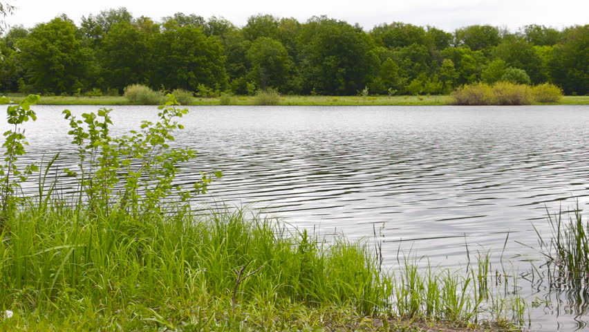 The shore of the lake, river, pond. Ripples on the water. Forest on the bank of the lake of the river. Overcast
