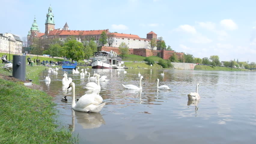 Famous landmark Wawel castle seen from Vistula, Krakow, Poland. Swans at foreground