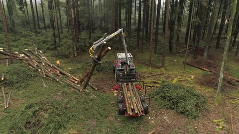 AERIAL, CLOSE UP: Flying above logging truck putting pile of delimbed cut logs and tree trunks on stacked tractor in dense overgrown forest. Forwarder loading harvest for the transportation to sawmill