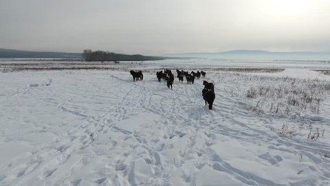 Horser in winter landscape