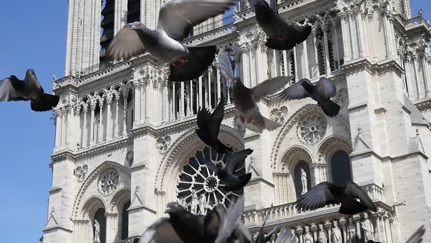 PARIS, FRANCE - MAY 23, 2017: Birds Pigeons Fly In Slow Motion Near Notre Dame De Paris Building