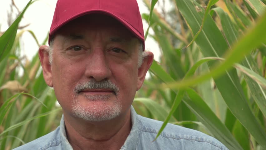 Farmer, close up of face in corn field