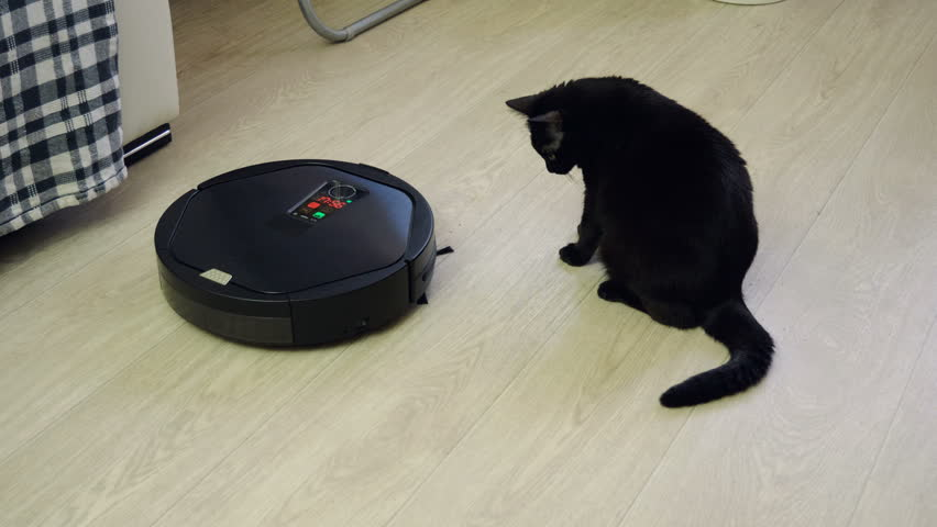 Black cat playing with robotic vacuum cleaner which is cleaning floor covering. 4K