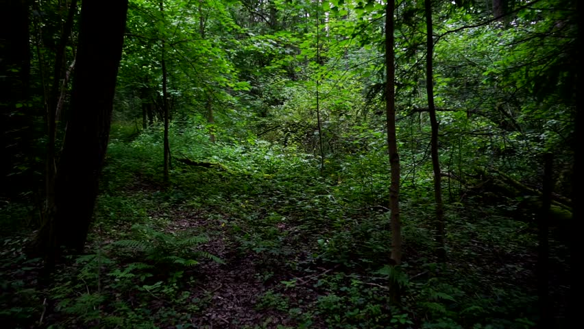 Walk in the wild forest.First person view | Shutterstock HD Video #28666579