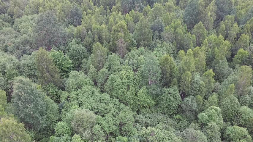 This flight with a drone I made in russian province near the city of Pskov. The mixed forest consists of the pines, birches, oaks, fir-trees.