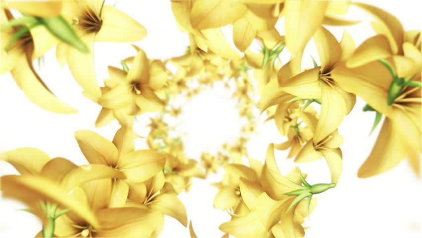 Animation flying of realistic flowers buds on clear and bright background. Animation of seamless loop.