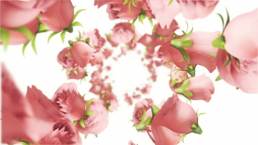 Animation flying of realistic flowers buds on clear and bright background. Animation of seamless loop.   Shutterstock HD Video #28716196