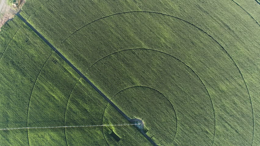 High aerial view of irrigation patterns on a corn field | Shutterstock HD Video #28855966