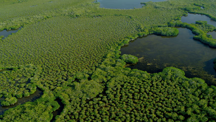 Aerial view of Florida National Park Everglades marshland and swamps Sub tropical climate nr Miami USA RED EPIC
