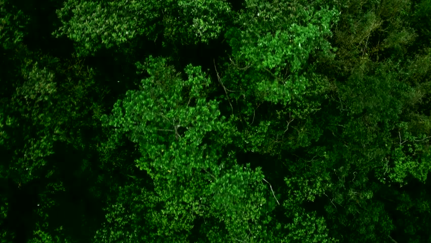 Bird eye view of tropical forest | Shutterstock HD Video #29089396