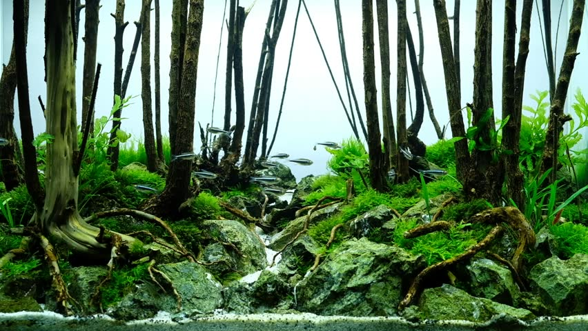 Aquascape Forest Style