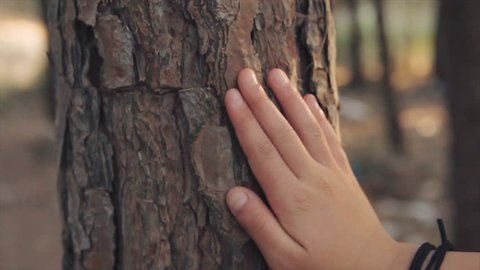 Closeup on little girl hand that touching on tree trunk in the forest