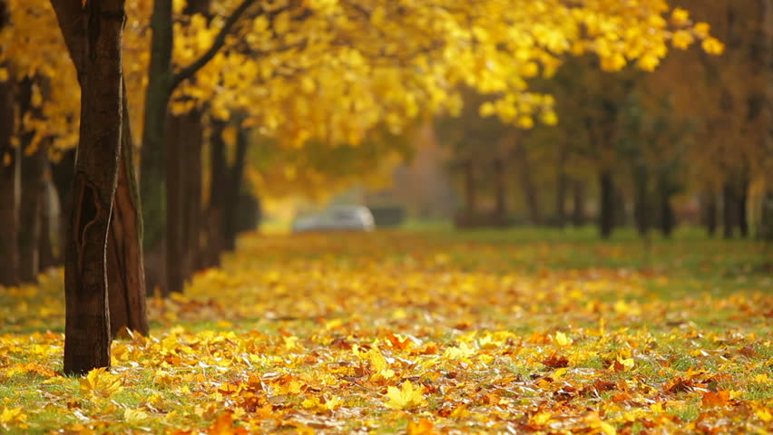 thanksgiving landscape pictures