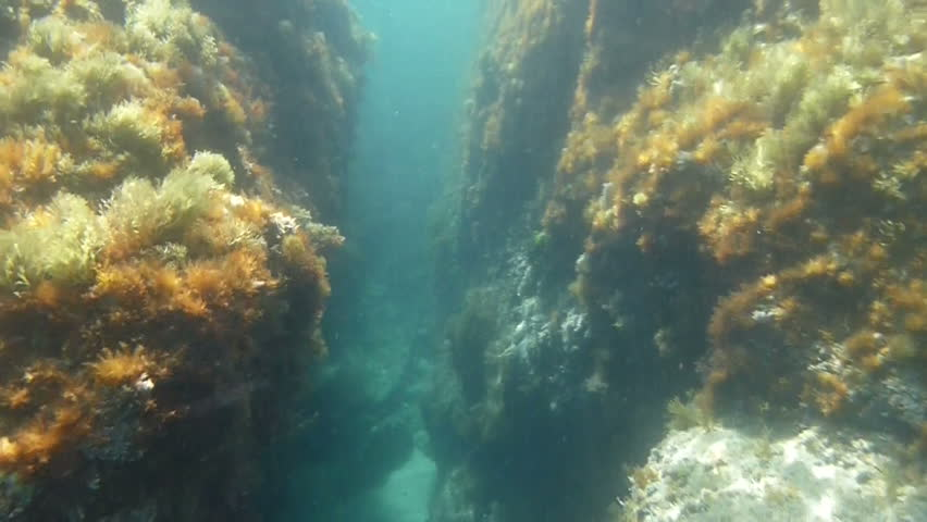 Swimming through an underwater canyon in the Spanish Mediterranean