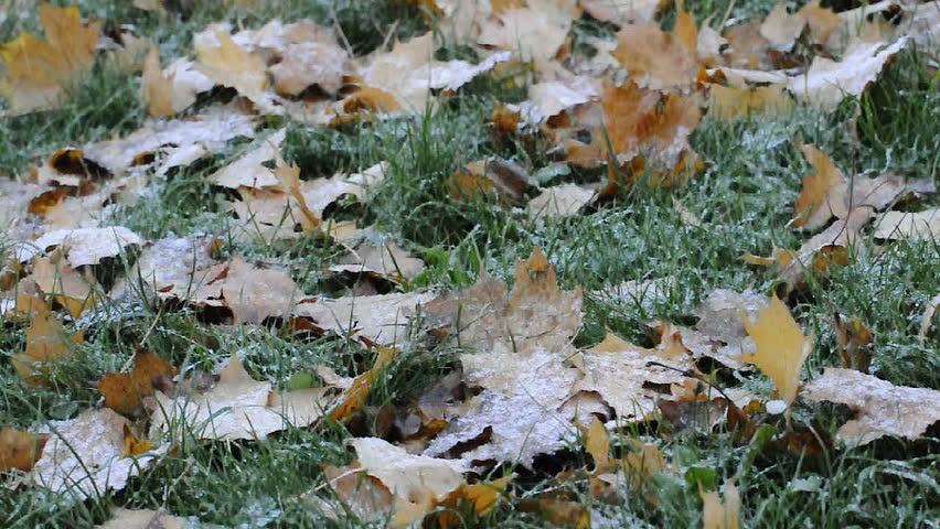 First snow falling on yellow leaves and green grass